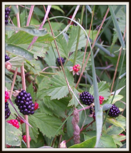 berries2