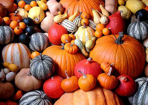 54210-pumpkins